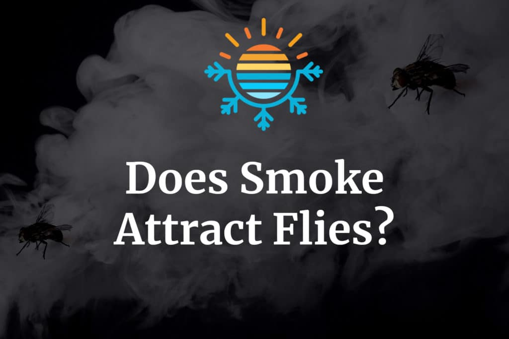 Does smoke attract flies